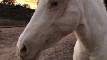 horse encounter